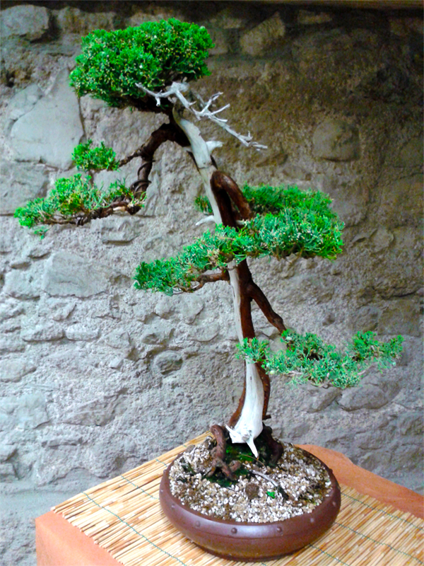 Civitavecchia Bonsai Club - Mostra all'antica Rocca