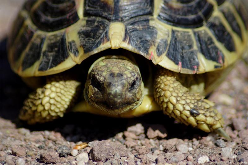 Oasi di macchiagrande port mobility civitavecchia for Stagno tartarughe